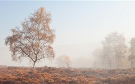 Morning, fog, trees, grass, autumn