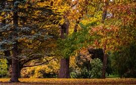 Новая Зеландия, Крайстчерч, осень, деревья, лес