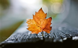 One maple leaf, bench, autumn