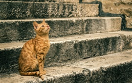 Orange cat sitting at stairs
