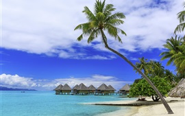 Palm trees, tropical summer, paradise, beach, sea, resort