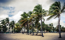 Preview wallpaper Palm trees, wind, park, clouds, Florida, USA