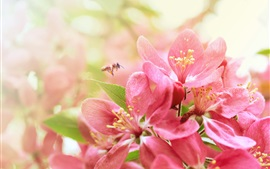 Preview wallpaper Pink flowers, flowering, spring, insect, bee