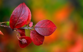 Preview wallpaper Red leaves, twigs, autumn, blurry background
