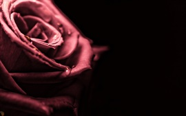 Preview wallpaper Red rose macro photography, dew, black background