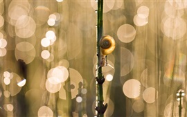 Preview wallpaper Snail, twig, glare, bokeh
