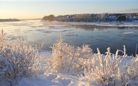 Snow, ice, river, grass, trees, winter, morning