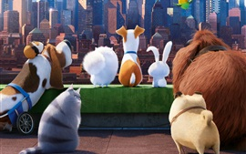 Preview wallpaper The Secret Life of Pets