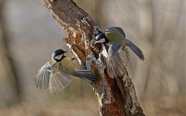 Dois, pássaros, brincalhão