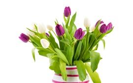 Flores blancas y púrpuras del tulipán, florero