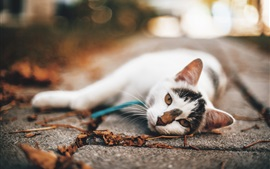 White cat lying on ground, autumn