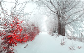 Winter, morning, snow, trees, red leaves, path