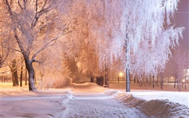 Winter, park, trees, snow, path, bench, night, lights