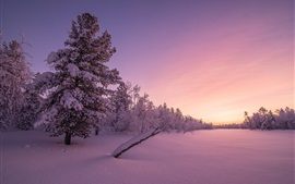 Winter, snow, trees, dusk, sunset