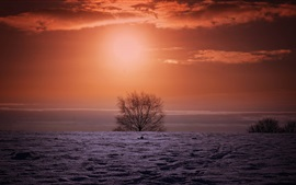 Winter sunset, field, tree, red sky