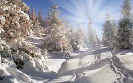 Preview wallpaper Winter, thick snow, trees, forest, sun rays