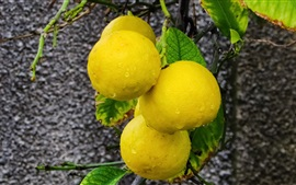 Yellow citrus