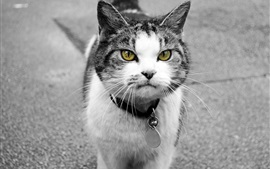 Yellow eyes cat front view