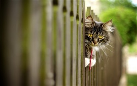 Preview wallpaper Yellow eyes kitten look, fence