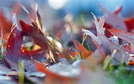 Preview wallpaper Autumn, red dry leaves, grass, ground