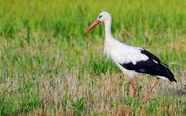 Preview wallpaper Birds photography, stork, grass