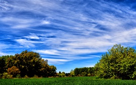 Blue sky, trees, field, summer