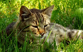 Cat lying on grass to rest