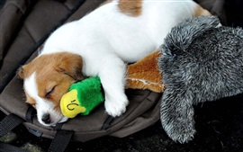 Cute puppy and toy sleep