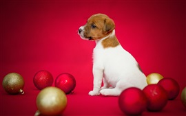 Preview wallpaper Dog and Christmas balls, puppy, red background
