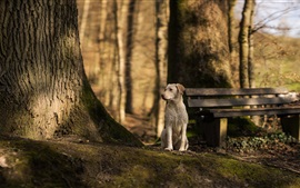 Preview wallpaper Dog look to other side, bench, trees
