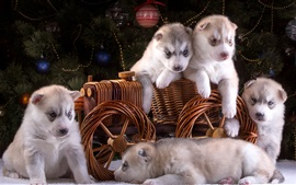 Preview wallpaper Five puppies, husky, toy wagon