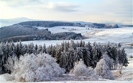 Preview wallpaper Germany, winter, snow, forest, trees