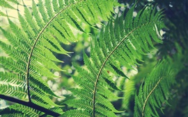Preview wallpaper Green fern leaves