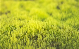 Preview wallpaper Green grass, fresh, spring