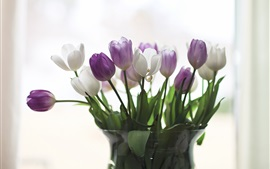 Home decoration flowers, tulips, white and purple, vase