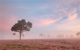 Preview wallpaper Morning, flowers field, tree, fog