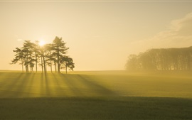 Morning, fog, trees, forest, field, sunrise