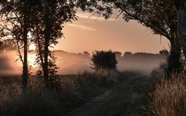 Preview wallpaper Morning nature, trees, grass, path, fog, sunrise