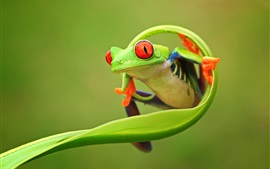 Preview wallpaper Nature animals, frog, leaf