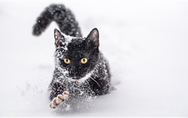 Preview wallpaper One black cat in the snow