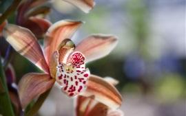 난초 꽃 매크로 사진, 꽃잎