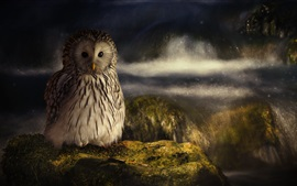 Preview wallpaper Owl, moss, stone, stream, dusk