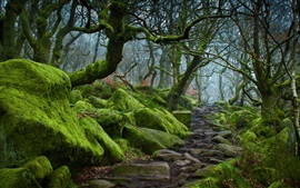 Padley Gorge, Peak District, Derbyshire, England, trees, moss