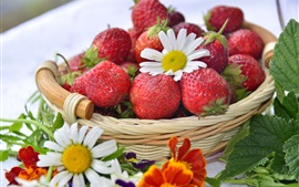 Red strawberry, berries, basket, white daisies
