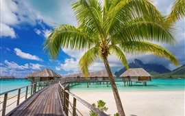 Tropical, resort, palm trees, paradise, huts, sea, beach