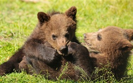 Preview wallpaper Two bears cubs playful, grass