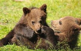 Dois, ursos, filhotes, brincalhão, capim