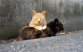 Dois, gatos, diferente, cores