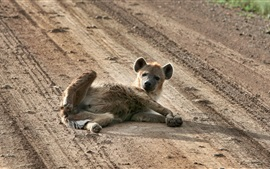 Preview wallpaper Wild dog lying on ground
