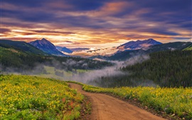 Preview wallpaper Wildflowers, road, mountains, forest, trees, clouds, sunrise